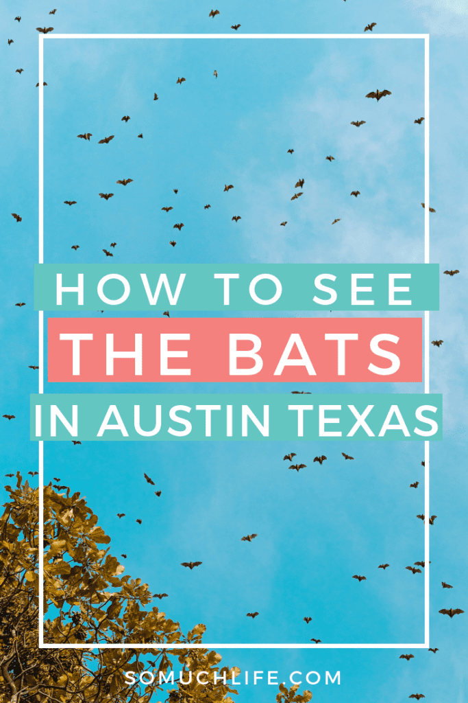 How to see the bats in Austin Texas